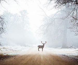 art, christmas, and deer image
