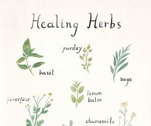herbs, green, and healing image