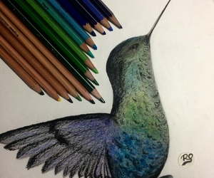 art, bird, and colored pencils image