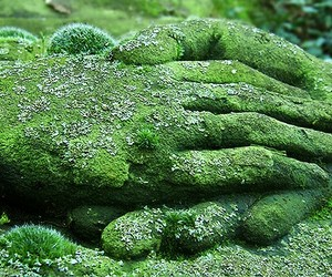 hands, green, and nature image