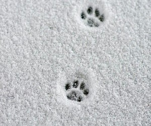 snow, animal, and winter image