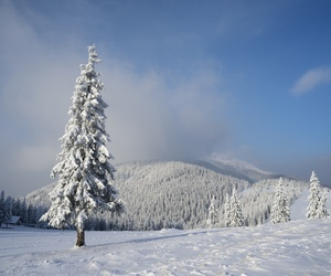 landscapes, nature, and winter image