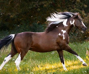 equine, grass, and paint image