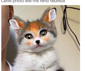 cute, cat, and snap image