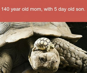 turtles and facts image