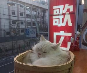 animal, japan, and cute image