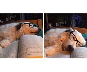 animals, book, and glasses image