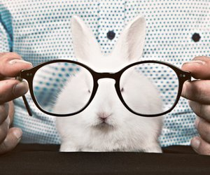 glasses, cute, and rabbit image
