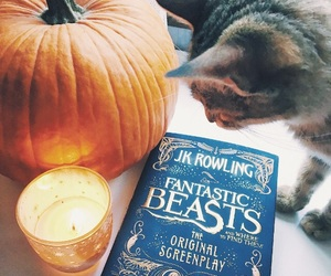 book, cat, and autumn image