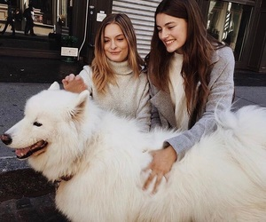 dog and brandy melville image