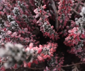 cold, flower, and pink image
