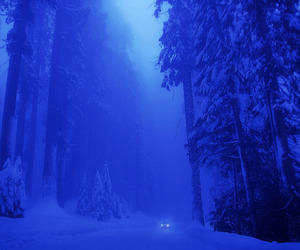 winter, forest, and nature image