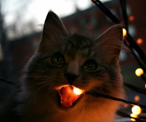 cat, animal, and light image