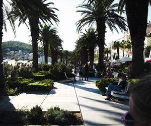 city, Croatia, and palms image