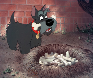 disney, lady and the tramp, and scottish terrier image