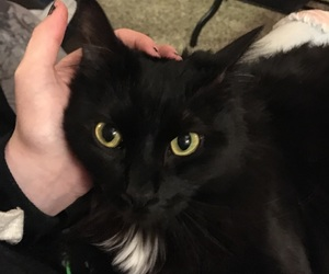 black, cats, and prettiest image