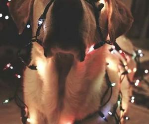 christmas, tumblr, and dog image