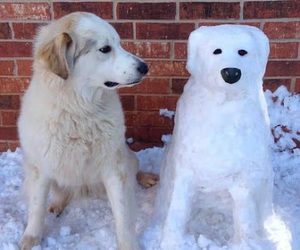 dog, funny, and snow image