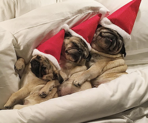 baby animals, puppy, and christmas image