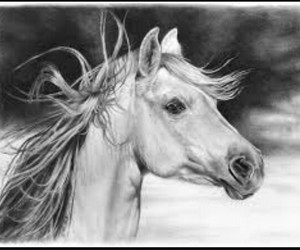 horse and draw image