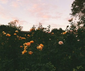 beauty, flower, and tumblr image