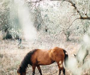 horse, nature, and landscape image