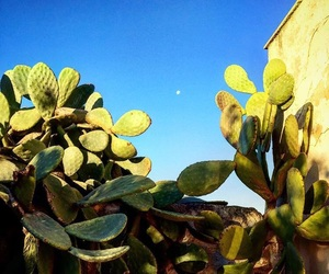 blue, cactus, and sky image