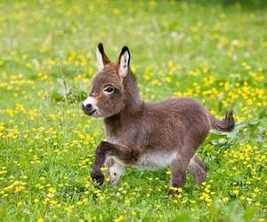 donkey and cute image