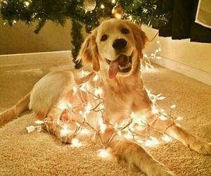 dog, christmas, and lights image
