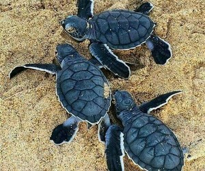 animals, beach, and brazil image