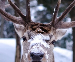 animals, snow, and deer image