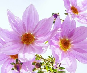 beautiful, fleur, and Fleurs image