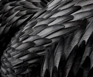 grey, theme, and dark theme image