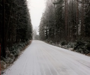 trees, road, and winter image