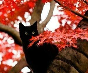 autumm, black, and cat image
