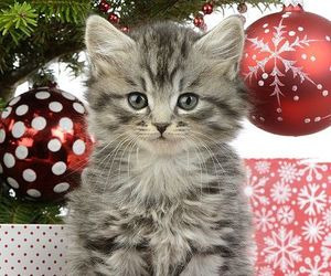 christmas and kitty image
