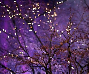 light, tree, and purple image