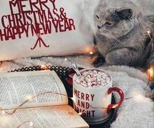 book, cat, and christmas image