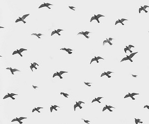bird, wallpaper, and background image
