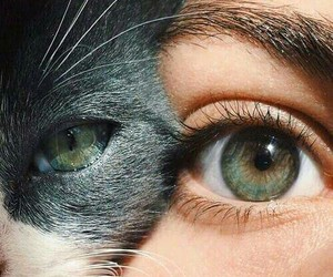 cat, girl, and green eyes image