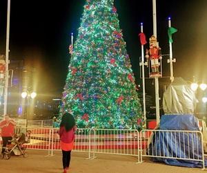 christmas, florida, and holiday image