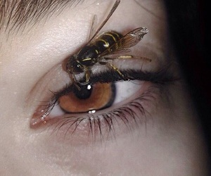 bee, eye, and eyes image