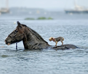 horse, dog, and water image