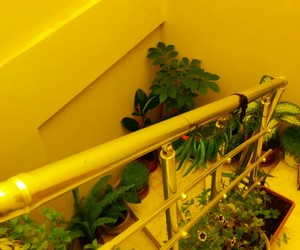 yellow, green, and plants image