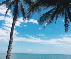 australia, Cairns, and palm image