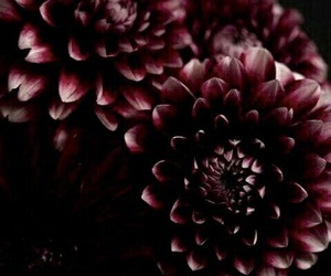flowers, dark, and grunge image