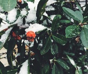 background, christmas, and mistletoe image