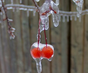 cherry, frozen, and winter image