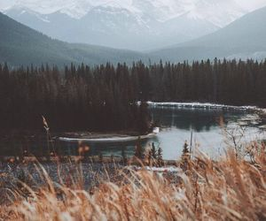 nature, mountains, and forest image