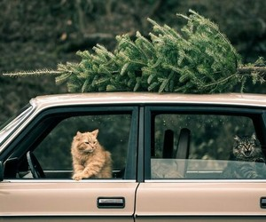 cat, car, and vintage image